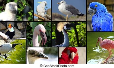 portraits of birds