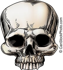 Human skull illustration in a retro vintage style