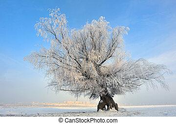 frozen tree on winter field