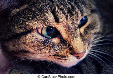Crying cat - An emotional portrait of a crying cat...