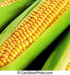 maíz, Mazorca,