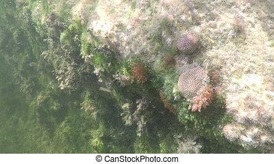 Coral underwater Fl Keys