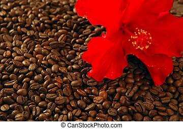 Red hibiscus flower on toasted coffe beans texture...