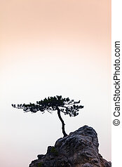 Silence - A Little Tree on a Little - Small windswept...