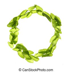 Basil mint leave still frame over white - Basil mint leave...