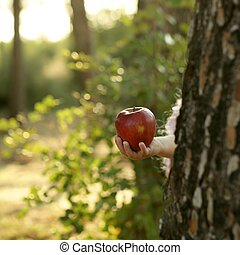 Fantasy girl holding a red apple in the forest, Robbin hood...