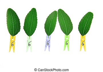 leaves transparency with clothes pin composition - Fantasy...