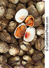 Fresh Blood Cockles market edible background