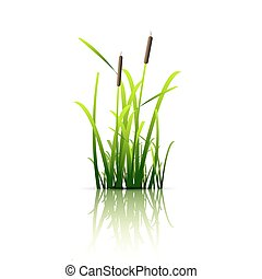 Grass green reed Vector eps 10