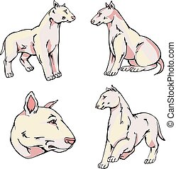 Bull Terrier dogs - Set of cute dogs - Bull Terrier breed...