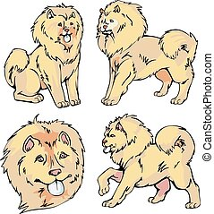 Chow-chow dogs - Set of cute dogs - Chow-chow breed. Vector...