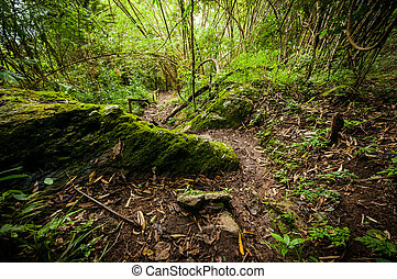 landscape of a path in the forest, nature park from Thailand