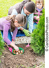 Mother and daughters planting tulip bulbs - Gardening,...