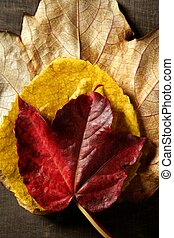 Still of autumn leaves, dark wood background, fall image