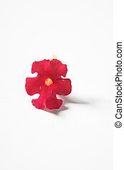 Lantana little flower over white background, studio shot