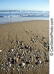 beach sand texture with clam shells, shadows of morning sun
