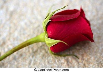 Red rose over old aged teak wood