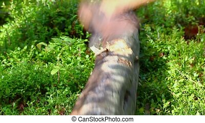 Processed log with an ax in the forest