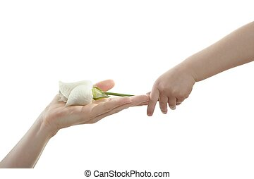 Daughter, son, giving mother a white rose, isolated on white