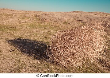 Tumbleweeds Stock Photos and Images. 279 Tumbleweeds pictures and ...