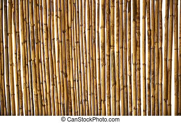 Dry cane texture background
