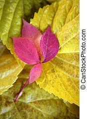 folhas, ainda, Outono, folhas, escuro, madeira, fundo,...