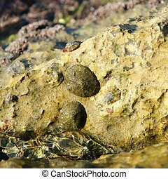 Marine rock on docks, barnacle - Marine rock texture detail...