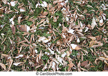 Dry autumn leaves - Fallen leaves on the ground in late fall