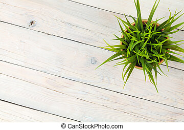 Potted grass flower over wooden table background with copy...