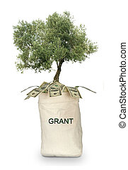 Tree growing from grant