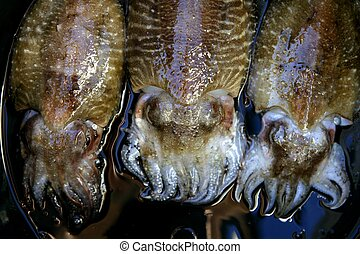Cuttlefish squid over black background - Cuttlefish squid...