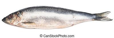herring isolated on white background