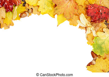 Background of multicolored leaves - Background of...