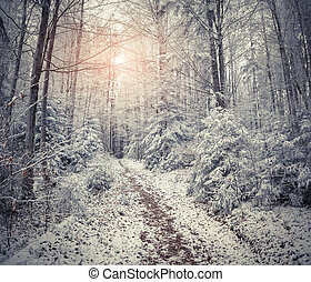 Beautiful winter sunrise in the mountain forest. Retro...