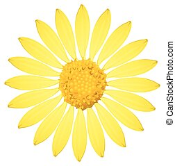 A yellow sunflower on a white background