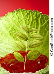 growing inside a cabbage leaf