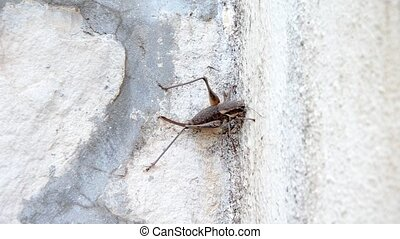 cricket on wall