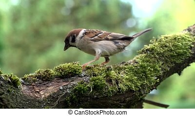 sparrow in summer