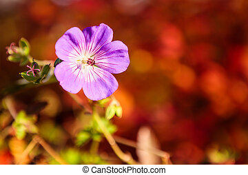 Purple flower and vibrant red background