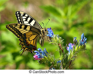butterfly on the blue flower