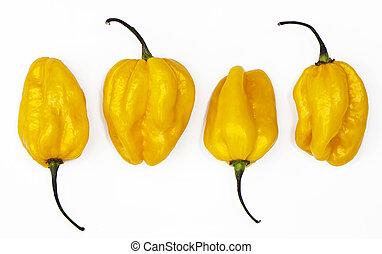 Yellow habanero peppers - Several yellow habanero chilies on...