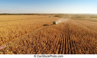 Harvesters Work on Cornfield - Aerial shot: Combine...