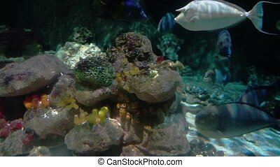 Large Coral Reef With Tropical Fishes - Colorful aquarium...
