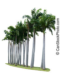 Palm tree on isolate white background