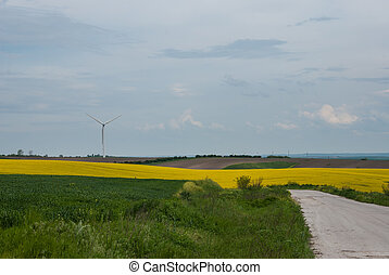 Rapeseed fields in Bulgaria. Old asfalt road and wind power...