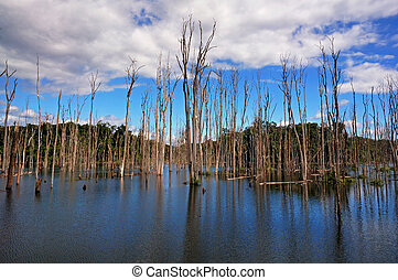 Dry Trees in a Lake