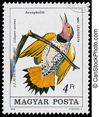 Stamp printed in Hungary shows northern flicker - HUNGARY -...