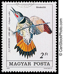Stamp printed in Hungary shows Common Flicker - HUNGARY -...