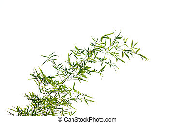 Bamboo leaves - High resolution image of bamboo leaves...