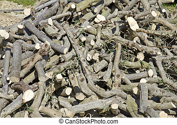 Wood - Close up of Stack of wood, tree trunks cut